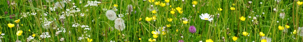 meadow-782997_1920