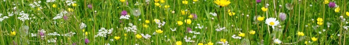 meadow-boven